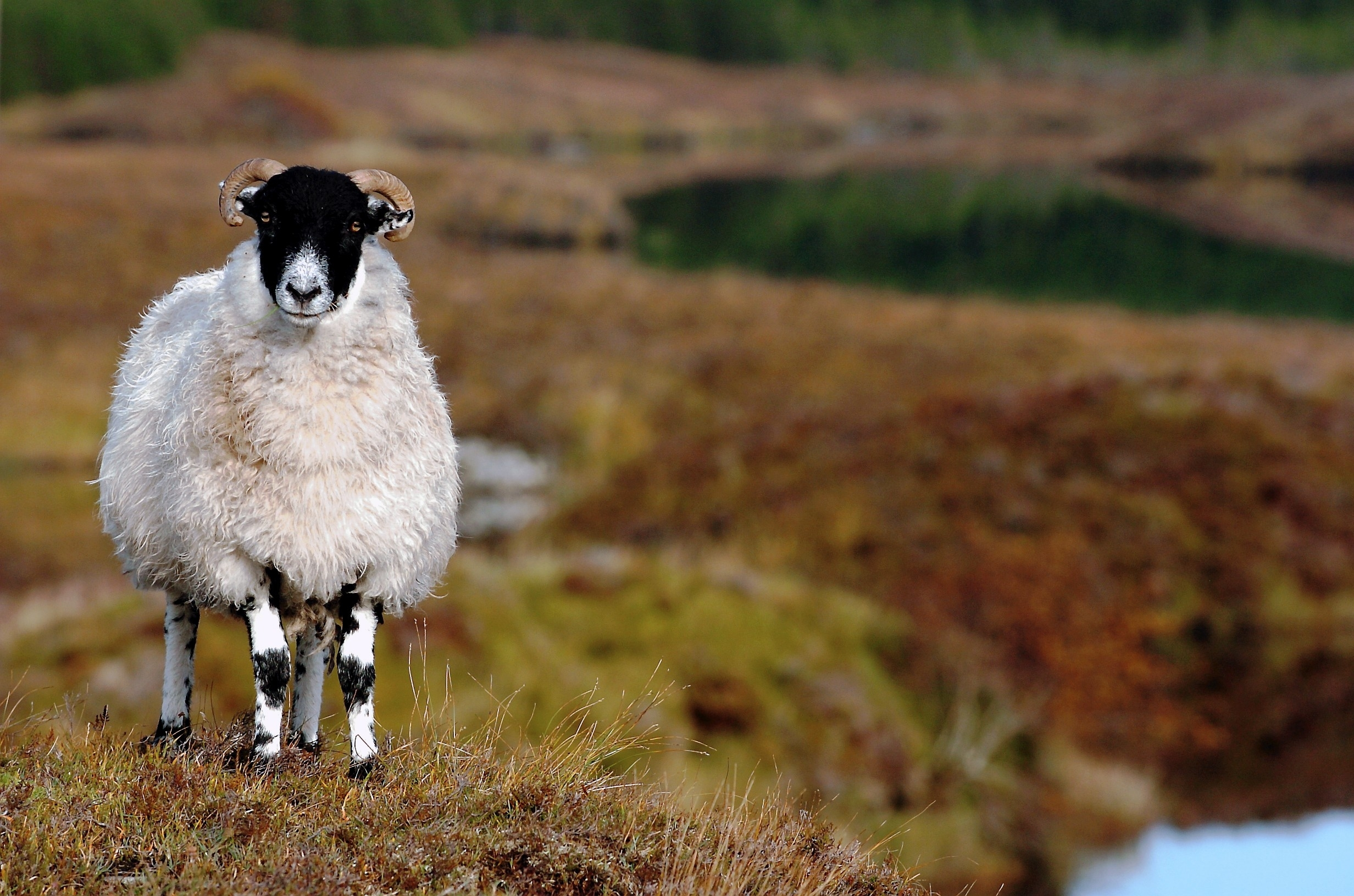 Farmers and crofters have until May 15 to submit their SAF.