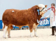Islavale Handy sold for 6,200gn