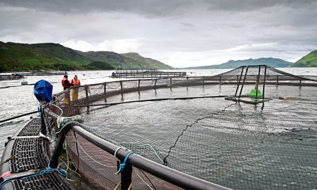 Generic picture of a fish farm