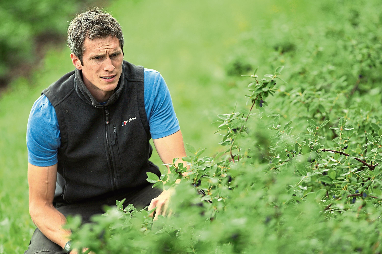 Stewart Arbuckle and honeyberries