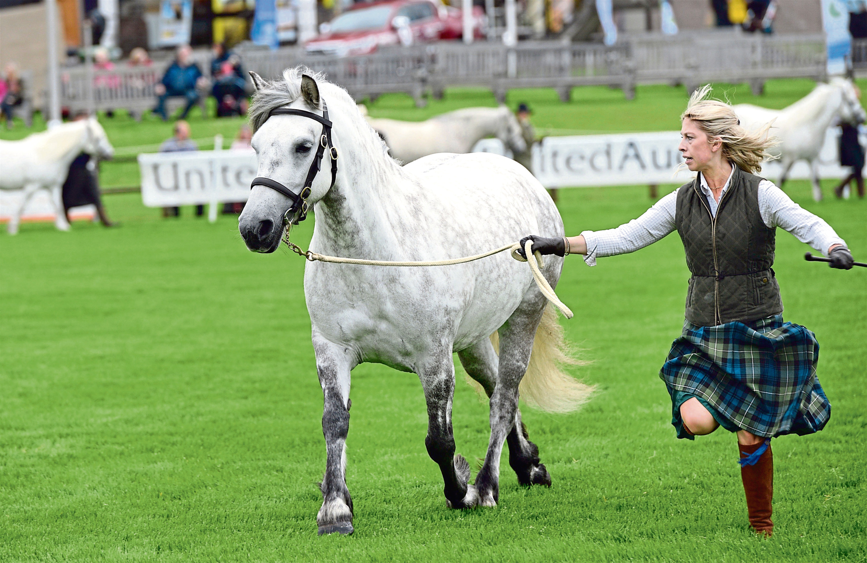 Early morning Highland Pony judging at the Royal Highland Show 2017