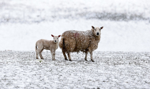 More than 250,000 lambs were lost between March and May this year.