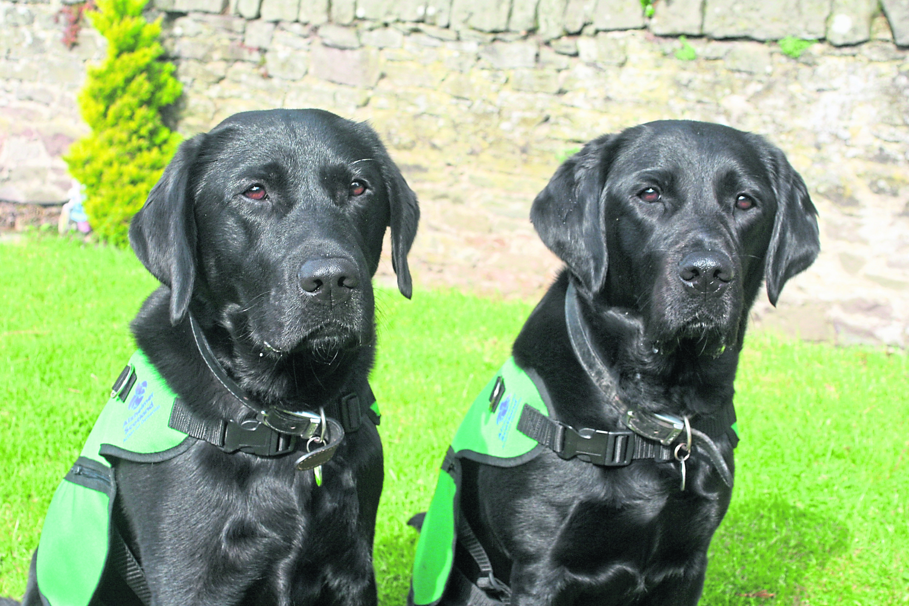 Lenny and Hope help families coping with dementia.