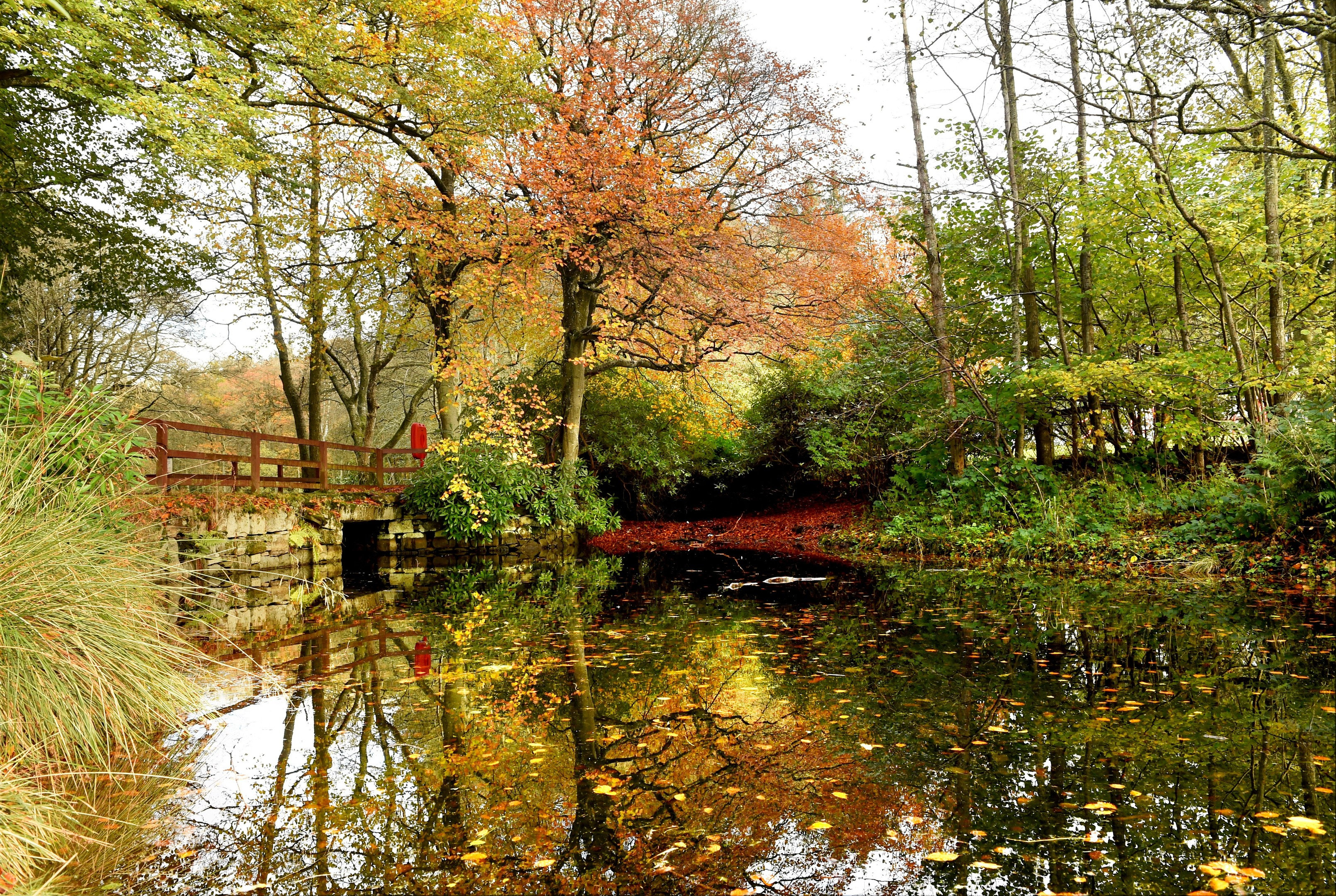 Autumn colours at Aden Country Park, Mintlaw.  Picture by Kevin Emslie.