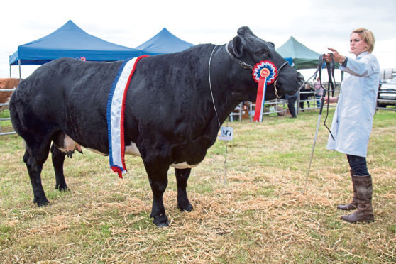 James Manson and his partner Louise Mackay, took the supreme cattle championship and the champion of champions award with their continental champion, Graymar Halle.
