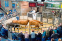 ANM head of livestock, John Angus, selling cattle at Thainstone.