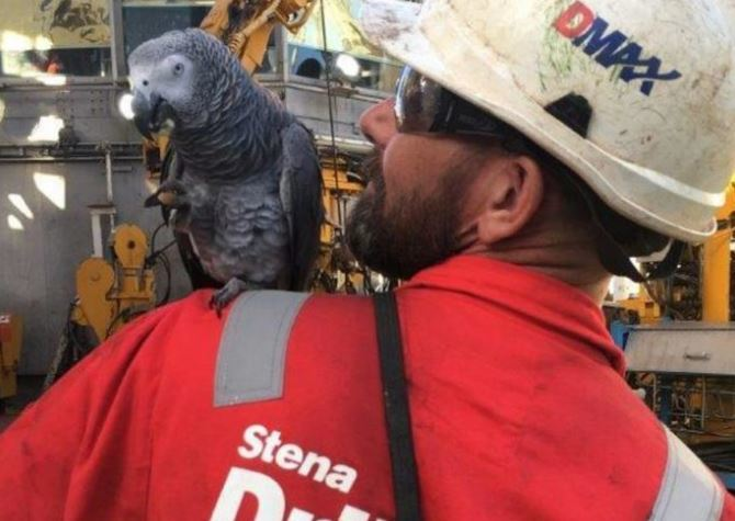 Stenna Drilling Parrot