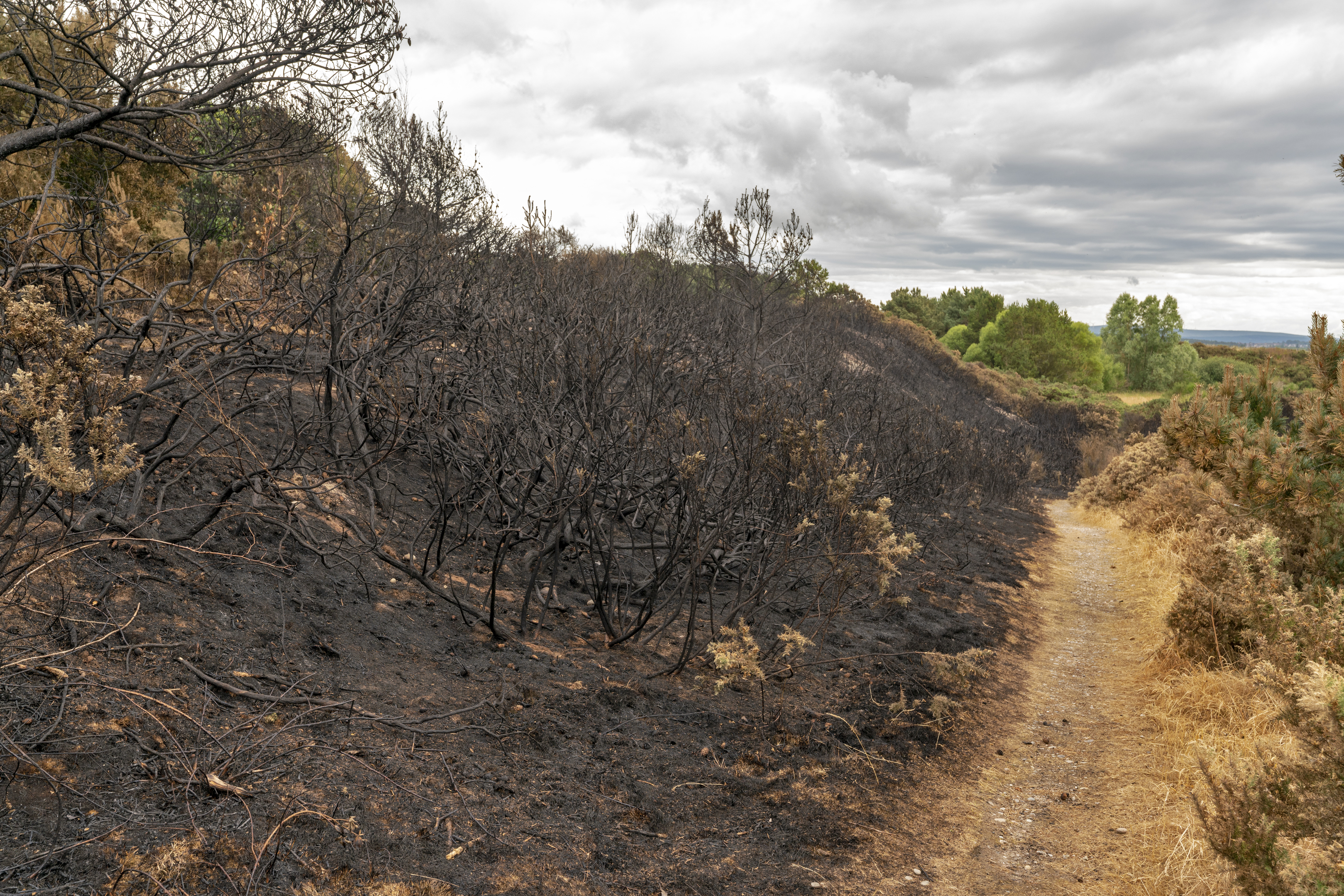Scene of the wilful fire-raising incident at the Sunbank Quarry.