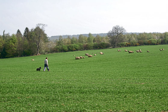 The committee was told of the need to toughen penalties for livestock worrying.