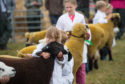 Sheep and cattle took centre stage at the Keith Country Show.