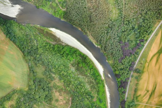 Patches of white giant hogweed and lime green Japanese knotweed have been revealed by using photographs from drones.
