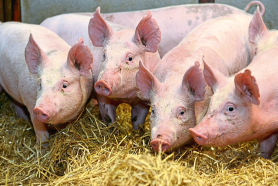 UK pig producers could benefit from demand for pork in Vietnam.