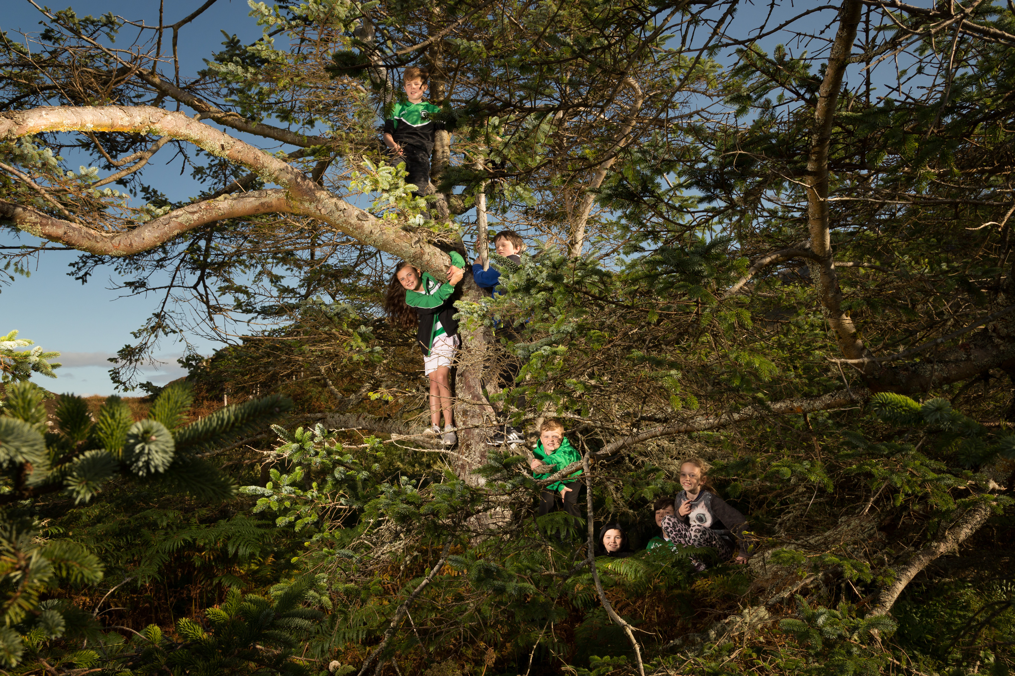 Youngsters can regularly be found climbing Netty's Tree on Eriskay.