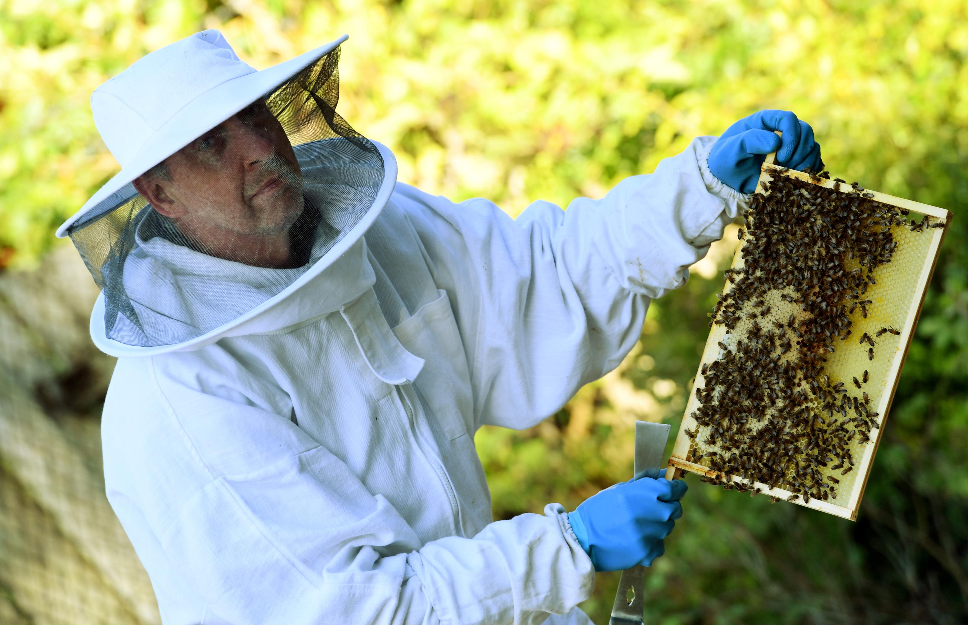 North East bee keeper Erling Watt.