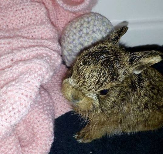 The hare has been taken into care at New Arc