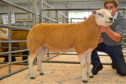 The sale topped at £1,600 for a Texel shearling from the Brown family at Hilton of Culsh.