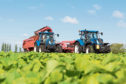 Vegetable yields are expected to be down by about 20% across the board.