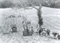 A large squad lifting potatoes in Fife probably in the early 1980s. By this time two row elevator diggers were used with two people picking side by side in each bit.