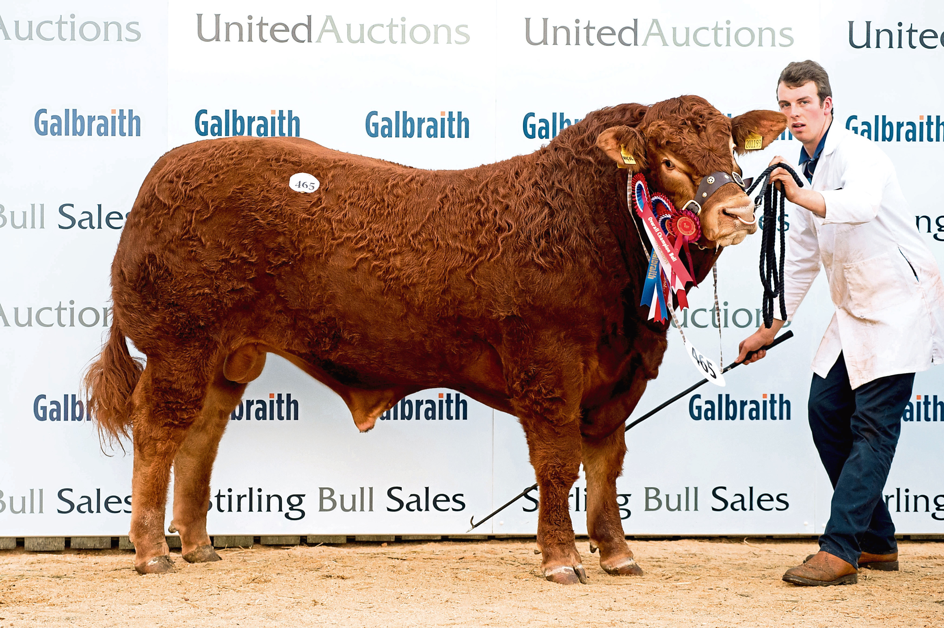 The Limousin champion sold for 11,000gn.