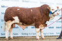 Islavale Irish sold for 16,000gn.