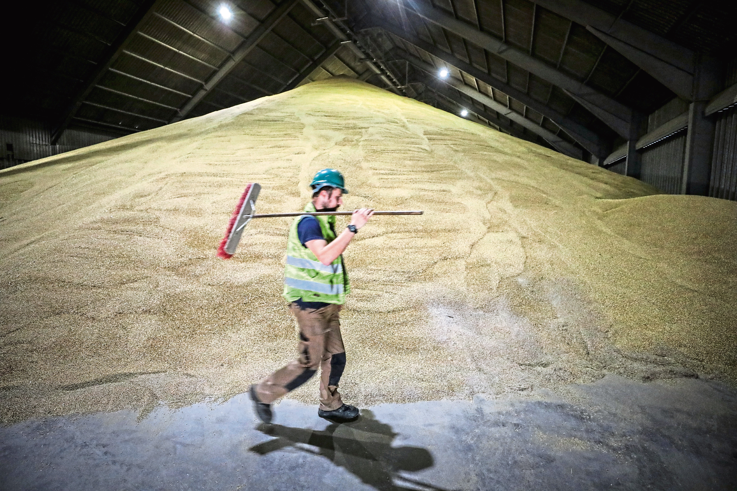 Courier News, Nancy Nicolson story CR0004063 . Forth Ports (Dundee) have had a hectic time with grain drying and storing of malting barley. Pic shows; Jake Low with Malting Barley being sorted, dried and checked at Forth Ports, Dundee Wednesday, 10th October, 2018. Kris Miller/DCT Media