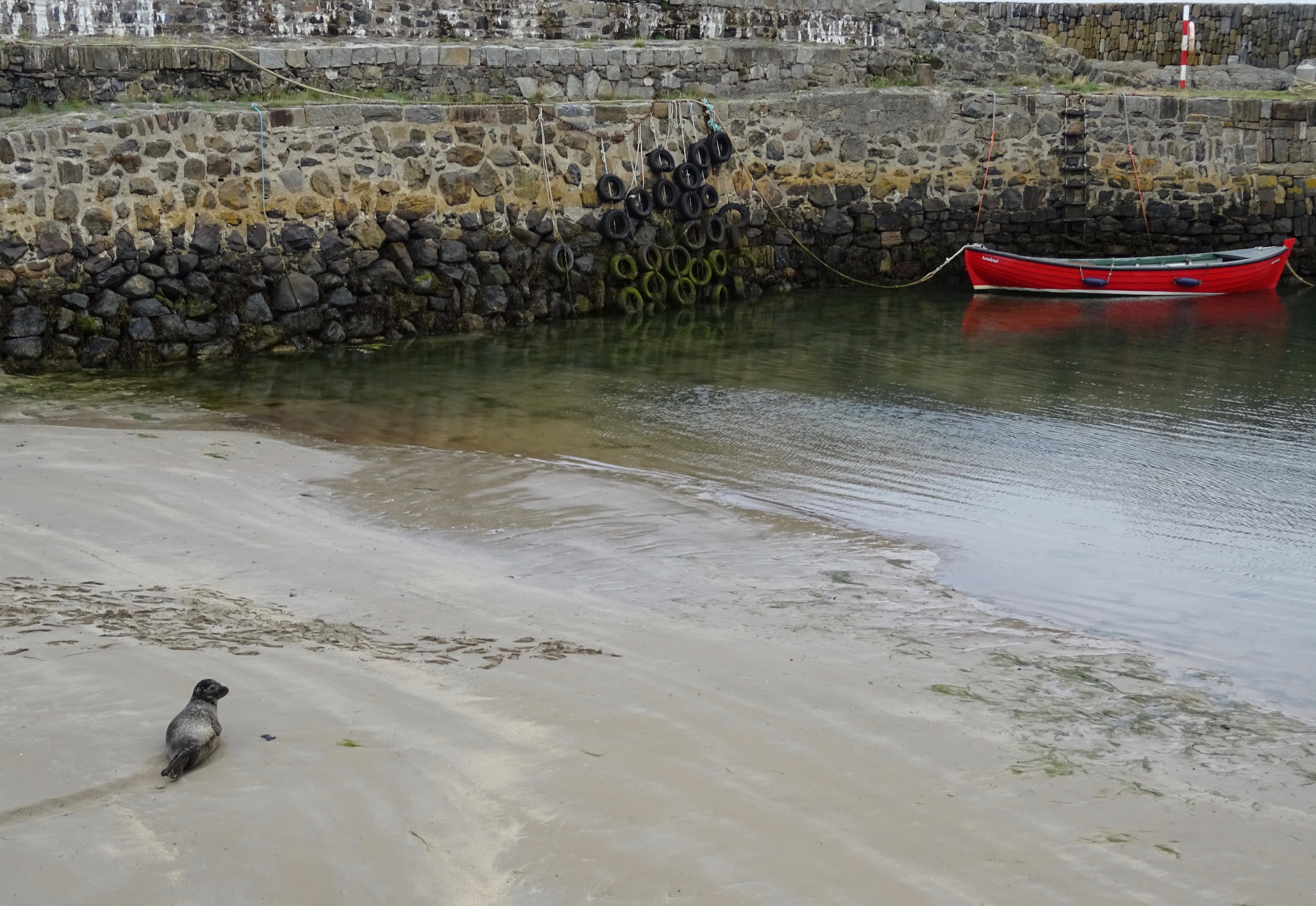 The Portsoy that has been named Sindy.