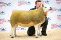 The 4,500gn Texel gimmer from Robbie Wilson, North Dorlaithers, Turriff, which was Texel champion at the 2017 Christmas Classic.