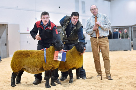 Champion, right, and reserve suffolk with father and son Melvin, right, and Murray Stuart.