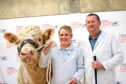 Anna Robertson and her father Iain from Lower Inchcorsie, Rothiemay, Huntly, with the 4,000gn Charolais bull Inchcorsie Nugget.