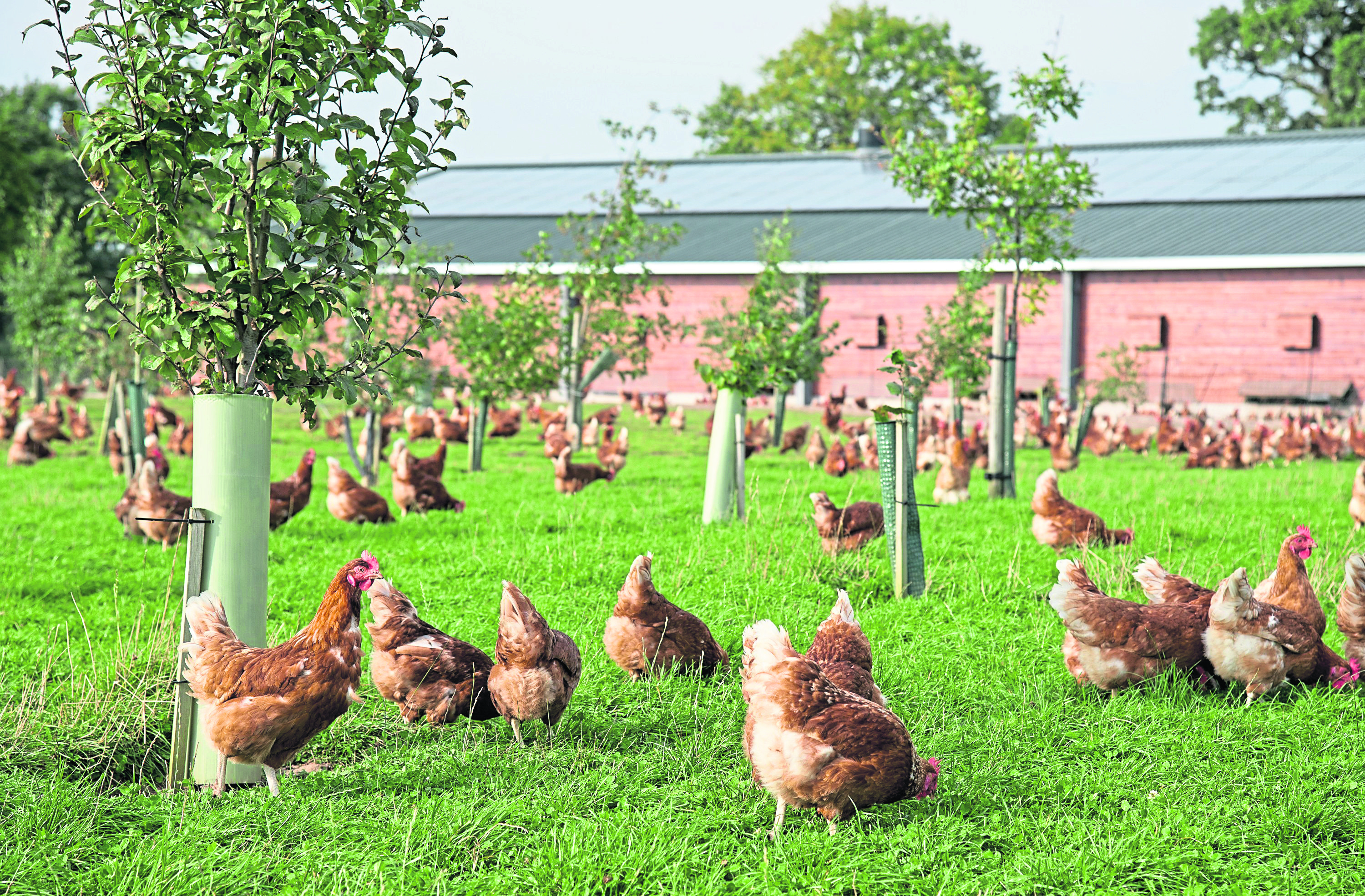 The producers must provide high welfare conditions including outside access.    free range eggs  As British Egg Week 2016 gets underway, a OnePoll survey has shown that 78% of UK shoppers who buy free range eggs are happy to pay a premium for them.  Even Brits who usually buy a value egg agree that free range eggs should be priced higher than those produced by birds which don't go outside.