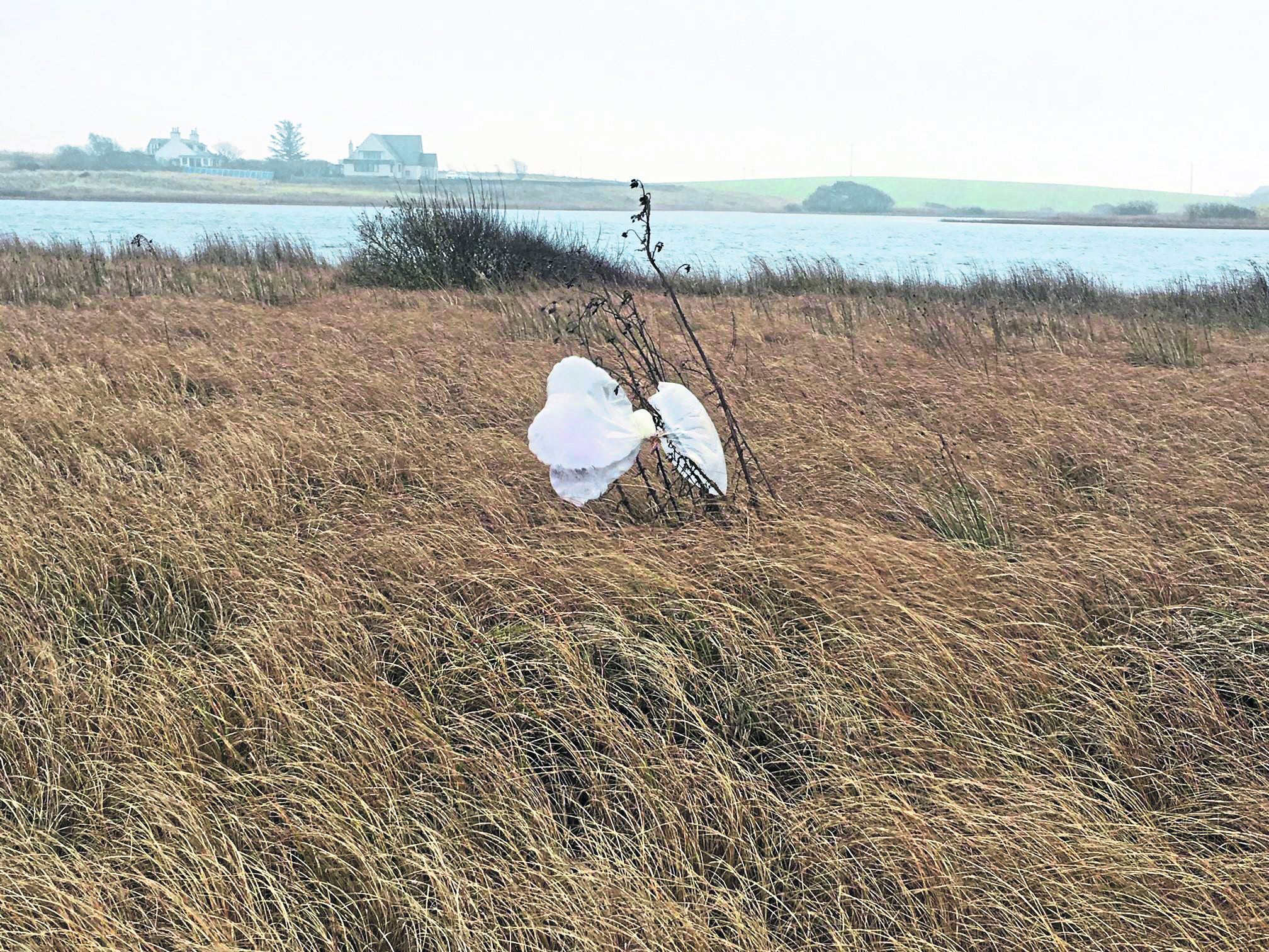 An Aberdeenshire ranger is speaking out about the dangers of balloon releases after finding another bunch entangled at a nature reserve.