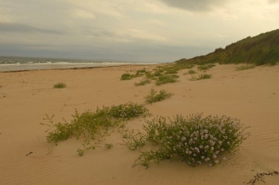 Coul Links near Embo