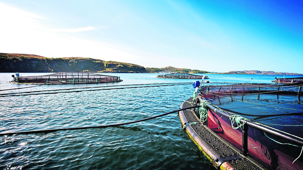 Scottish salmon farm medicine is significantly impacting local marine environments.