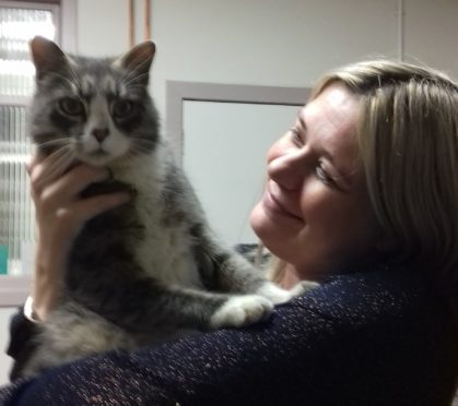 Sam, the tabby and white coloured tom cat who has been missing for four years.