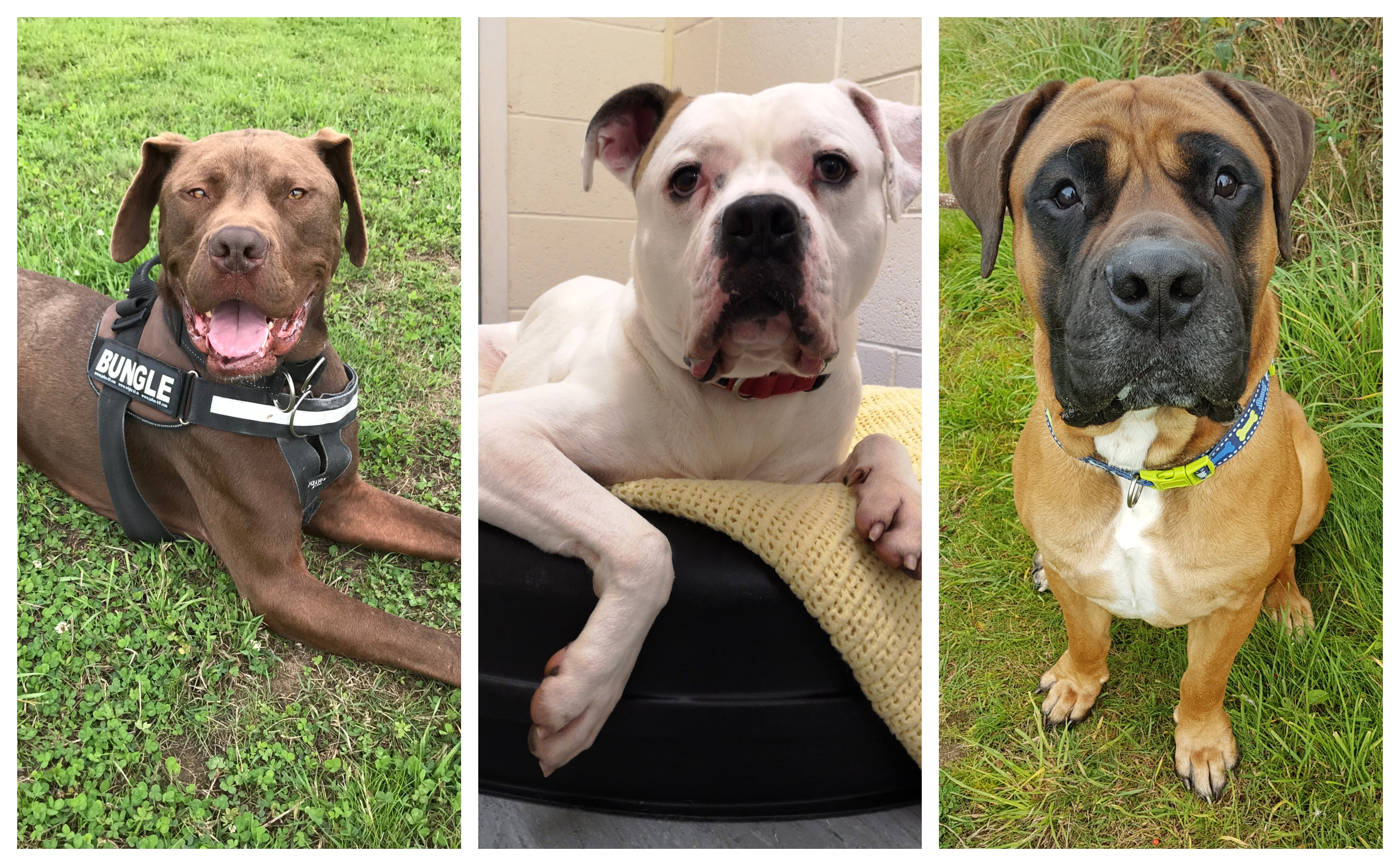 Bungle, Wallace and Magnus need homes this festive period.
