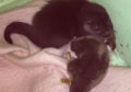 The otter cub was discovered by Paul and Grace Yoxon of the International Otter Survival Fund (IOSF)