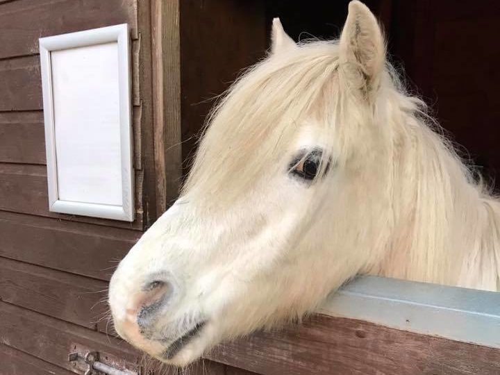 Nibbles the horse, who lives at Willows.