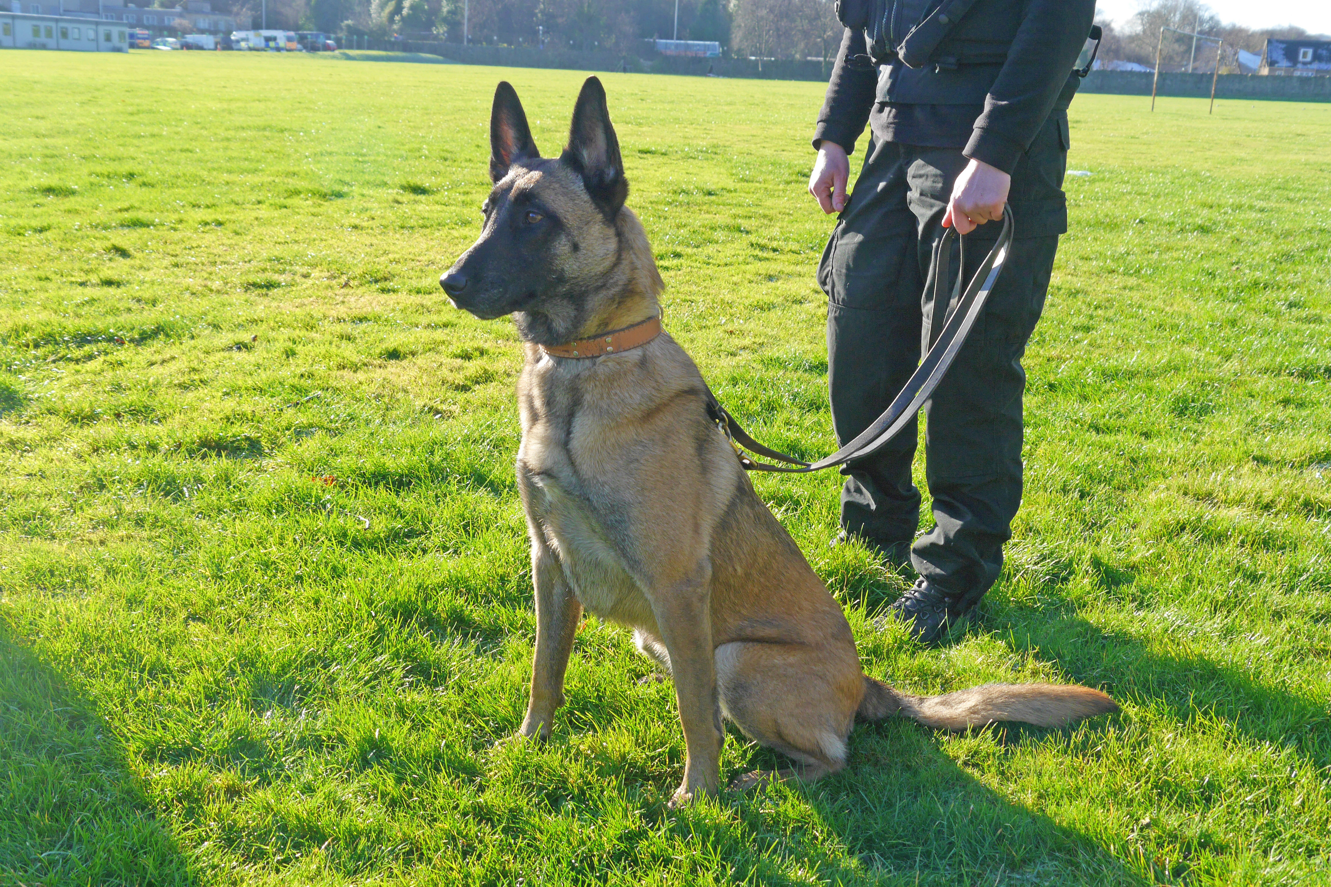 Police dog Draak at the launch of the Scottish Government consultation