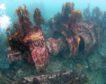 Remnants of the V81 German Battleship