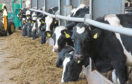 Muller is upping its milk price on May 1.