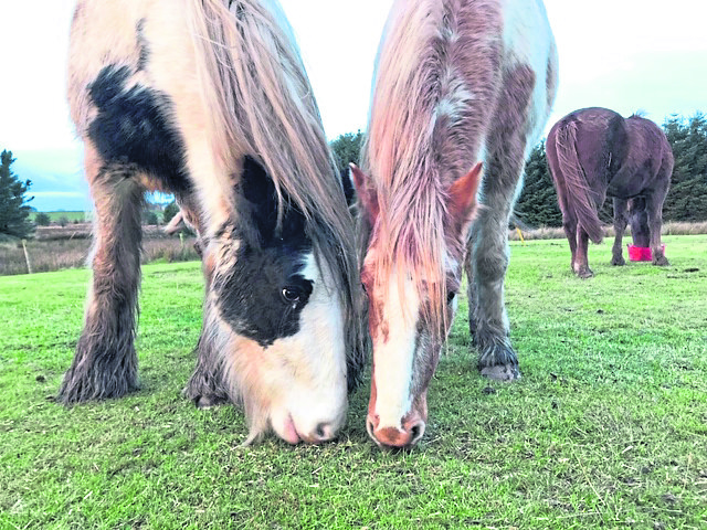 Polly and Georgie, horses at Willows Animal Sanctuary