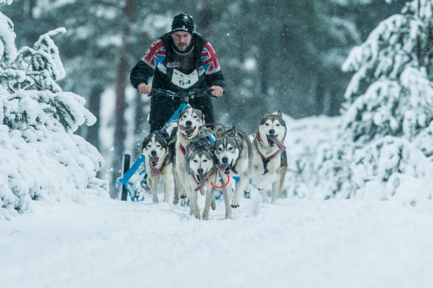 Competitors at the Siberian Sled Dog Rally in Aviemore