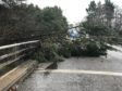 Tree down on south entrance to Stonehaven at Kirkton flyover - submitted by reader Jim Smith.