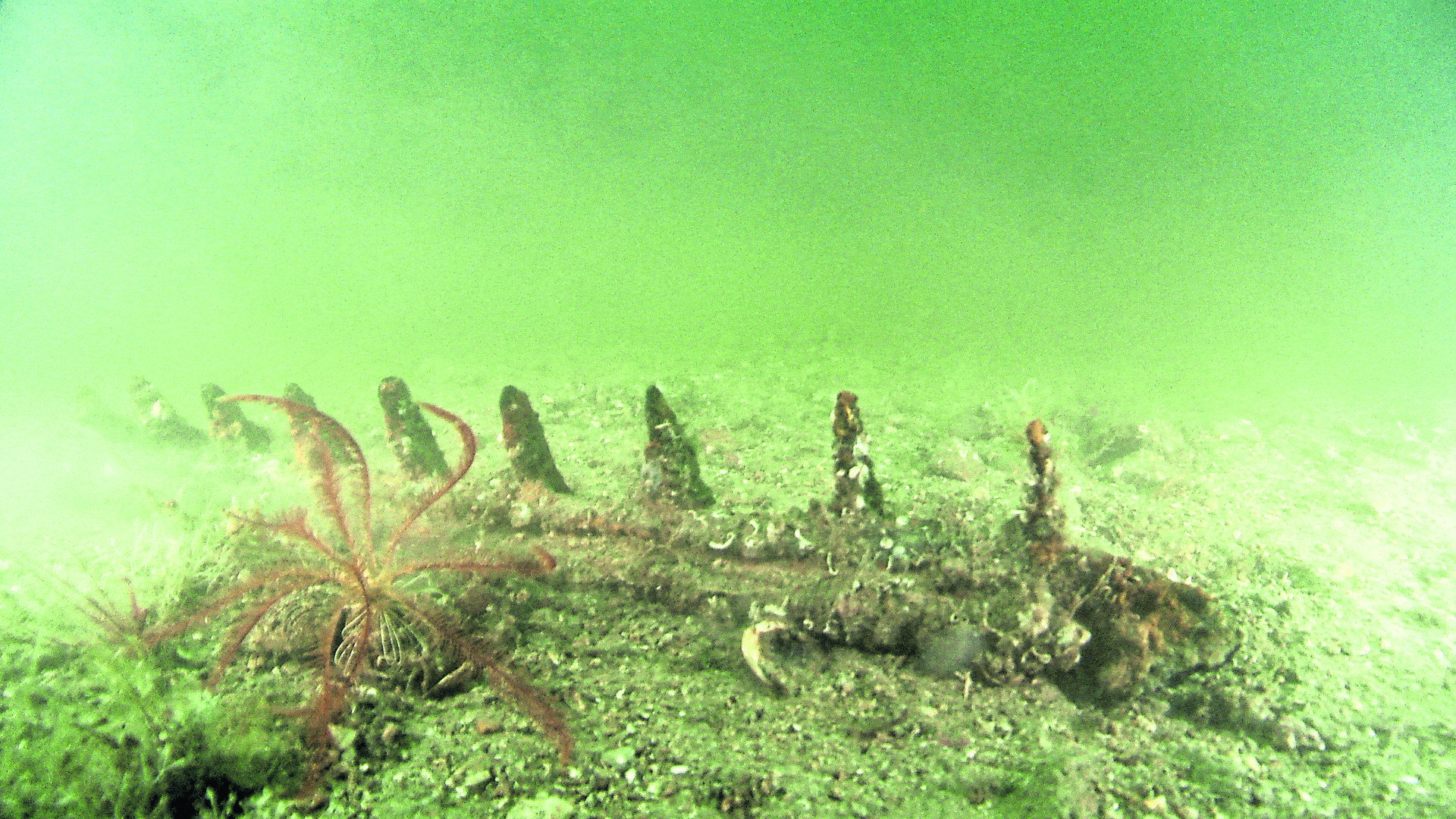 An image of the sea bed in Oban which alleges to show signs of illegal dredging.