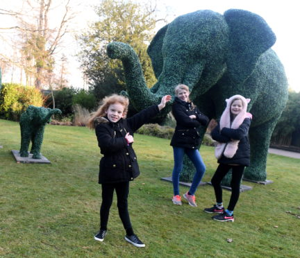 Bonham sisters, from left, Phoebe, 7 Emily 11 cor and Lucy 9 with the animals.