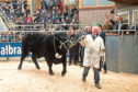 Linton Gilbertines Elgin picking up a 25,000gn price in the sale ring.