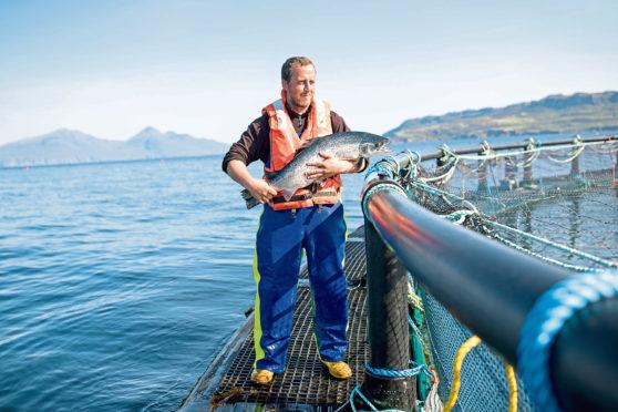 Marine Harvest's fish farming operation off Muck