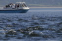 Bottlenose dolphins at Chanonry Point as keen wildlife tourists watch on