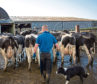 The study looked at the sustainable intensification of dairy farms.