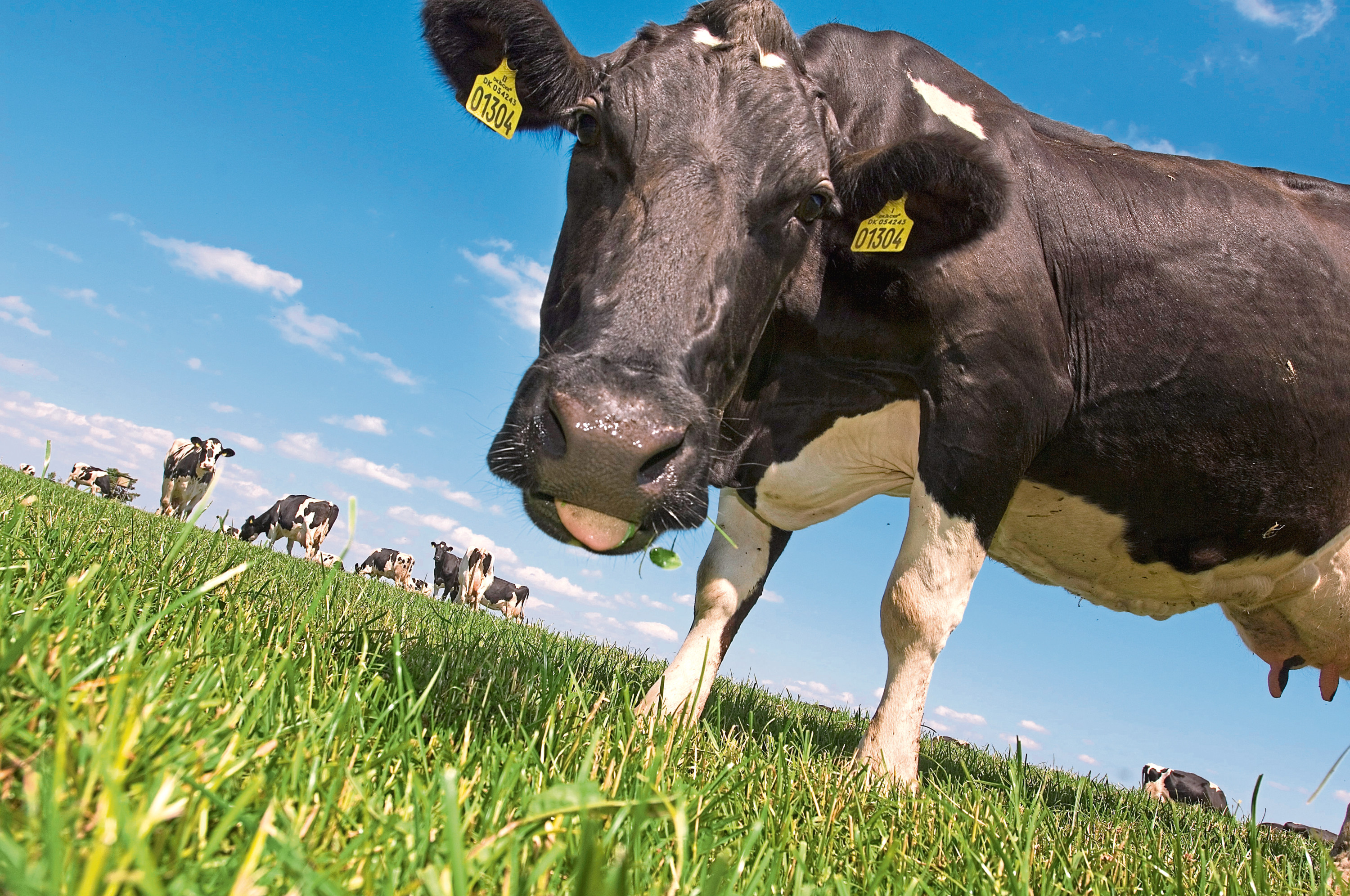 Arla buys milk from around one in four UK dairy farmers.